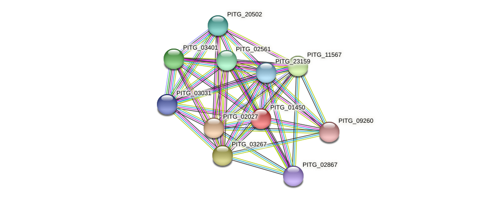 PITG_01450 protein (Phytophthora infestans) - STRING interaction network
