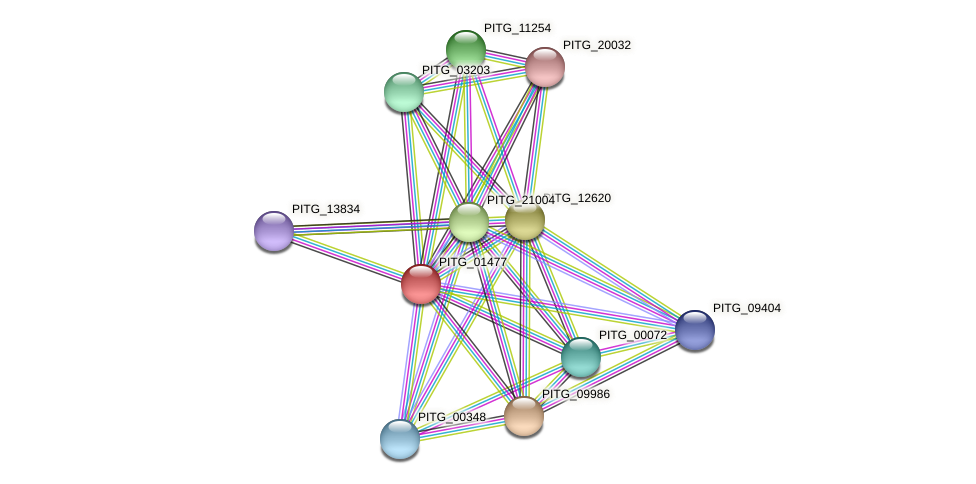 PITG_01477 protein (Phytophthora infestans) - STRING interaction network