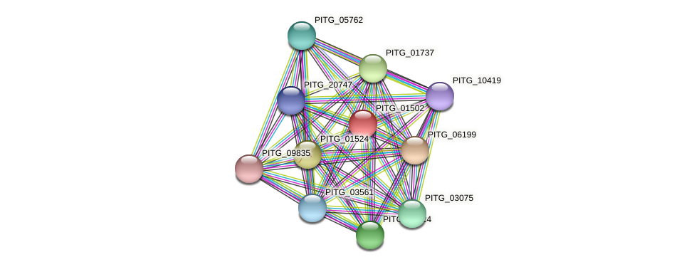 PITG_01502 protein (Phytophthora infestans) - STRING interaction network