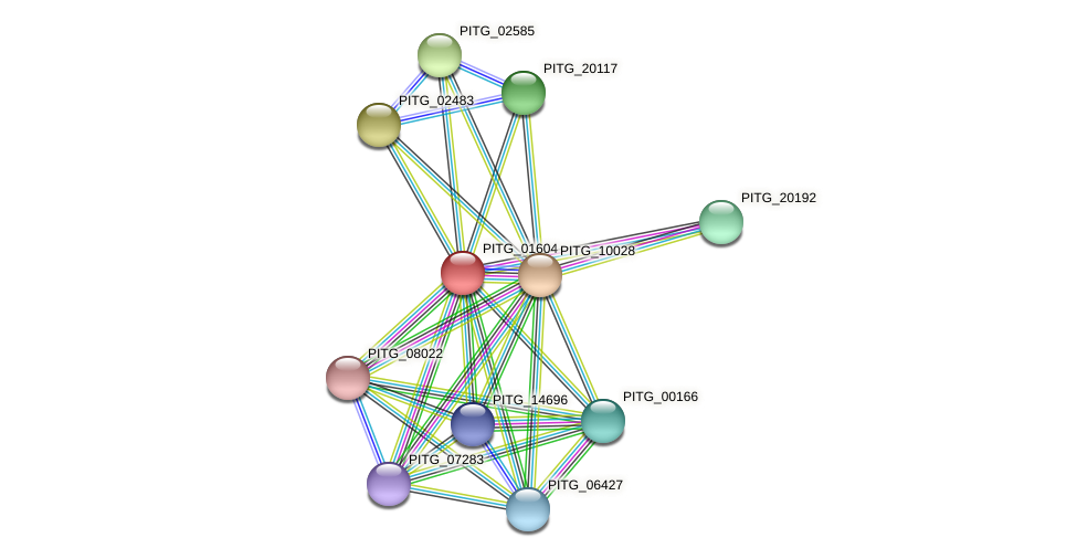 PITG_01604 protein (Phytophthora infestans) - STRING interaction network