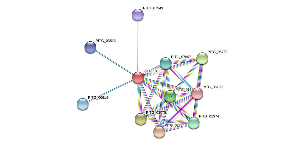 PITG_01650 protein (Phytophthora infestans) - STRING interaction network