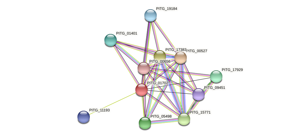 PITG_01702 protein (Phytophthora infestans) - STRING interaction network