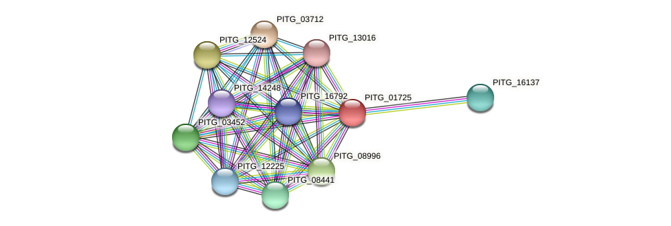 PITG_01725 protein (Phytophthora infestans) - STRING interaction network