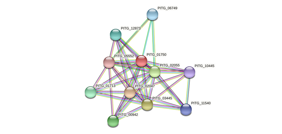 PITG_01750 protein (Phytophthora infestans) - STRING interaction network