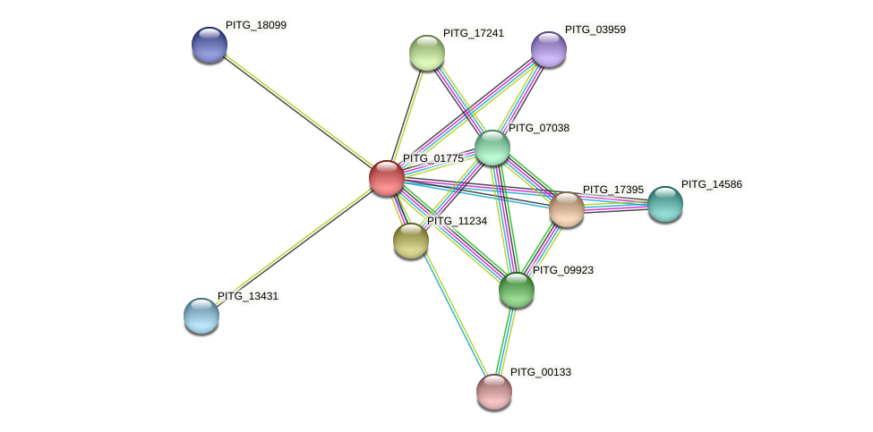 PITG_01775 protein (Phytophthora infestans) - STRING interaction network