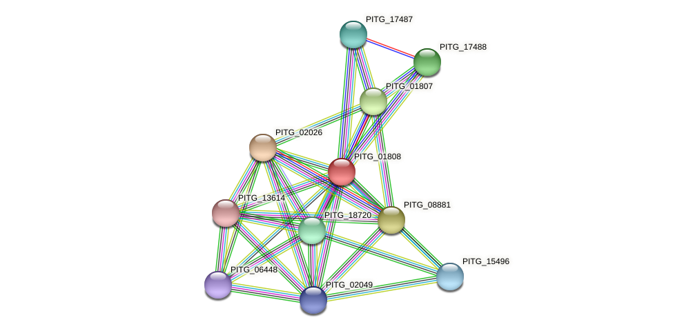 PITG_01808 protein (Phytophthora infestans) - STRING interaction network