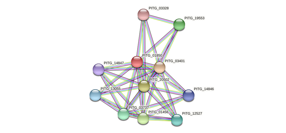 PITG_01850 protein (Phytophthora infestans) - STRING interaction network