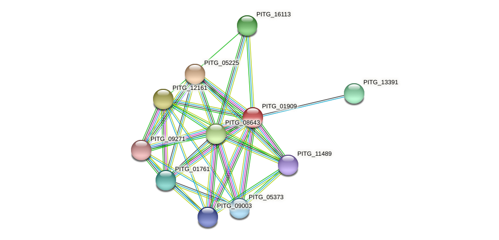 PITG_01909 protein (Phytophthora infestans) - STRING interaction network