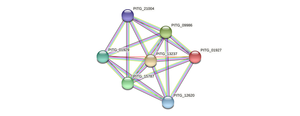 PITG_01927 protein (Phytophthora infestans) - STRING interaction network