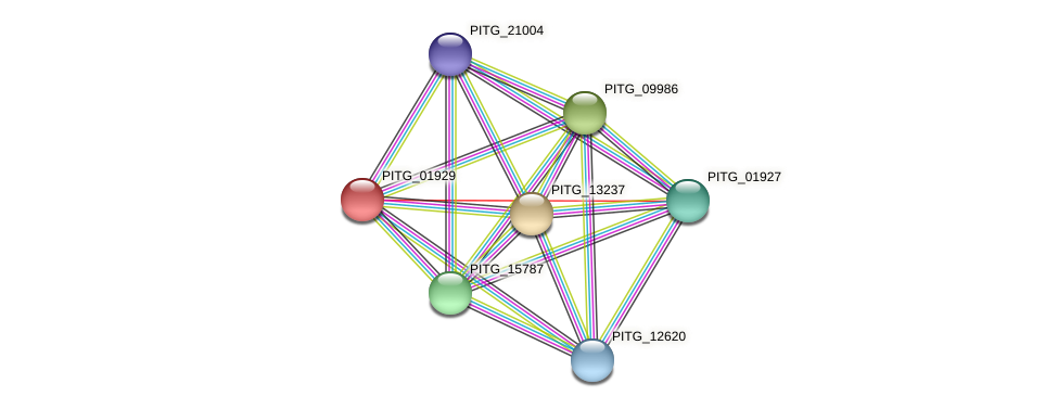 PITG_01929 protein (Phytophthora infestans) - STRING interaction network