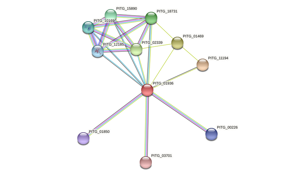PITG_01936 protein (Phytophthora infestans) - STRING interaction network