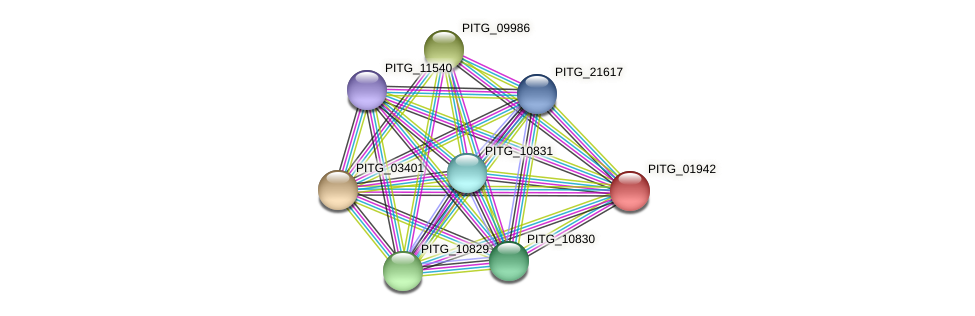 PITG_01942 protein (Phytophthora infestans) - STRING interaction network