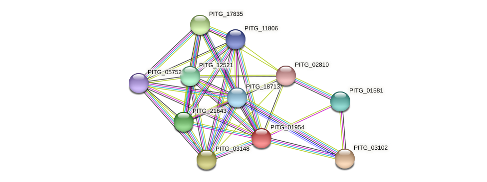 PITG_01954 protein (Phytophthora infestans) - STRING interaction network
