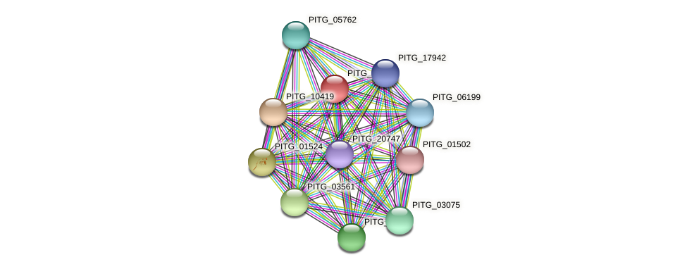 PITG_01961 protein (Phytophthora infestans) - STRING interaction network