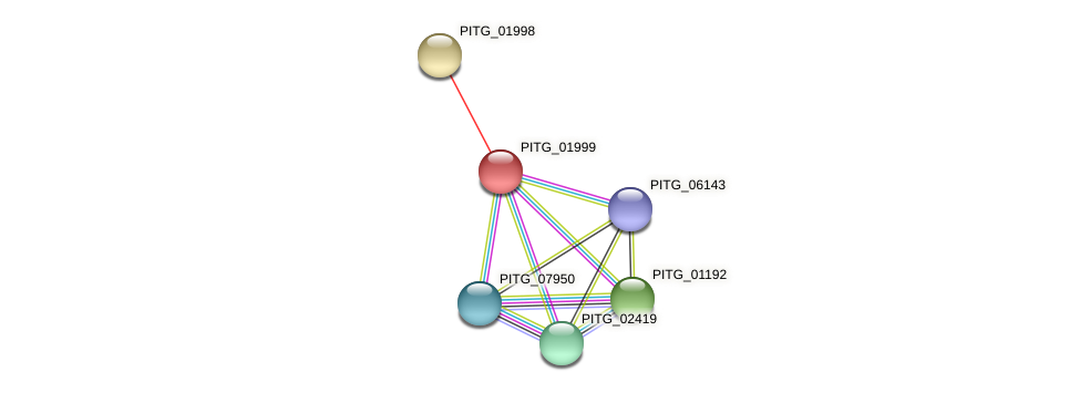 PITG_01999 protein (Phytophthora infestans) - STRING interaction network