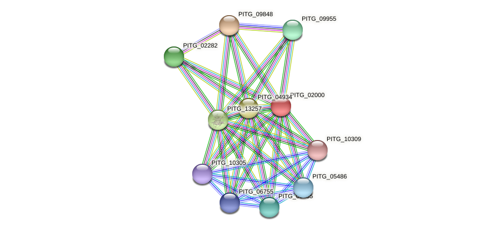 PITG_02000 protein (Phytophthora infestans) - STRING interaction network