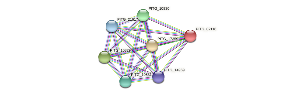 PITG_02116 protein (Phytophthora infestans) - STRING interaction network
