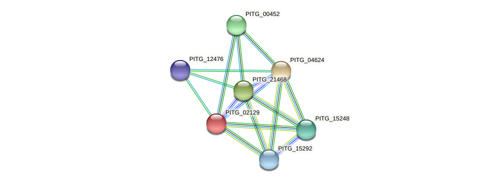 PITG_02129 protein (Phytophthora infestans) - STRING interaction network