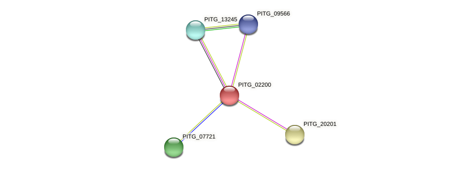 PITG_02200 protein (Phytophthora infestans) - STRING interaction network