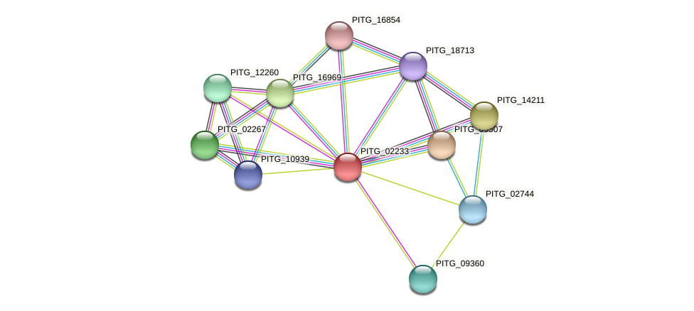 PITG_02233 protein (Phytophthora infestans) - STRING interaction network