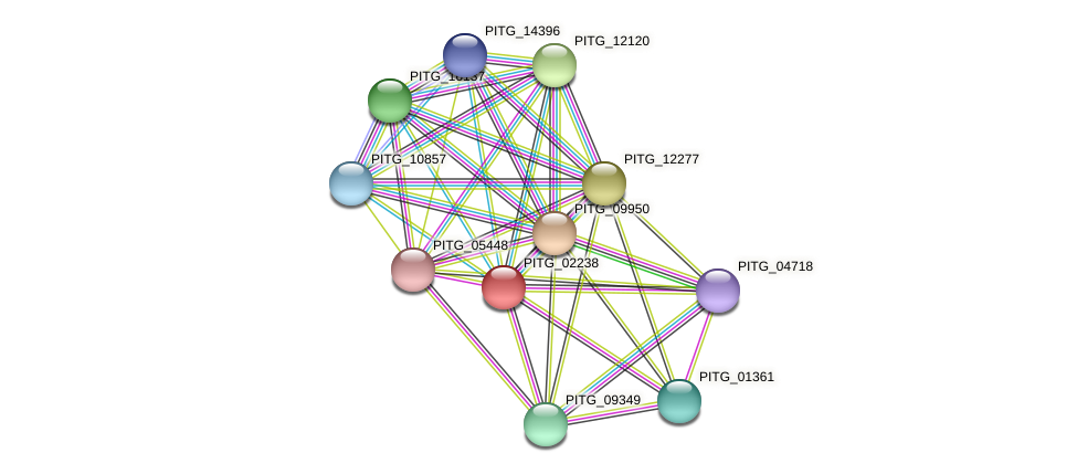 PITG_02238 protein (Phytophthora infestans) - STRING interaction network