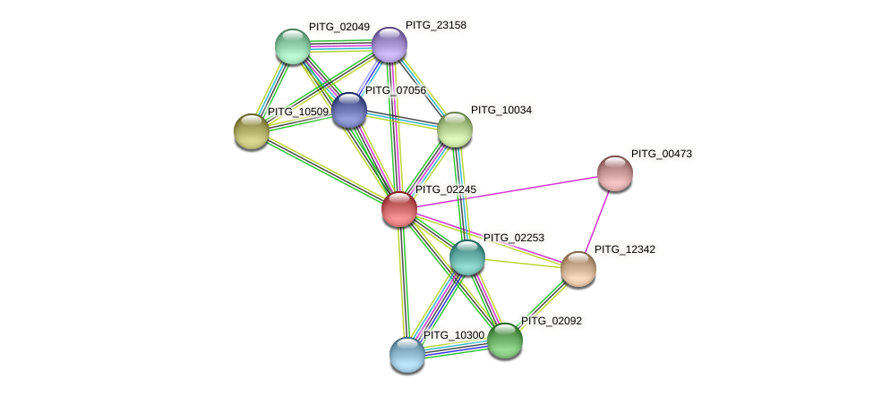 PITG_02245 protein (Phytophthora infestans) - STRING interaction network