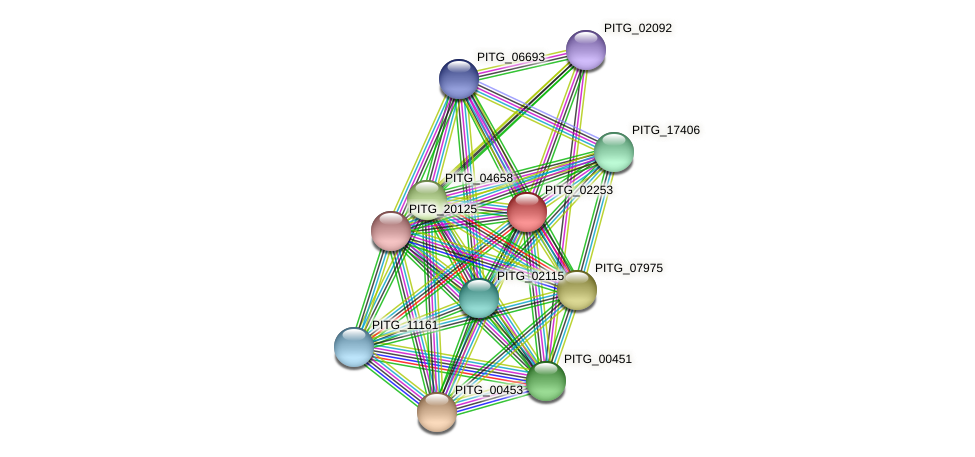 PITG_02253 protein (Phytophthora infestans) - STRING interaction network
