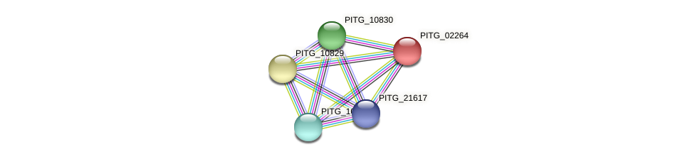 PITG_02264 protein (Phytophthora infestans) - STRING interaction network