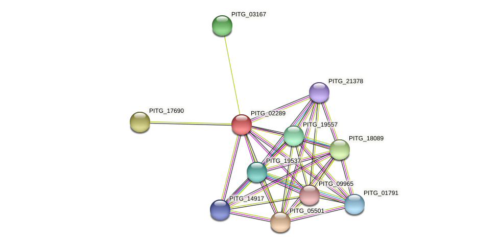 PITG_02289 protein (Phytophthora infestans) - STRING interaction network