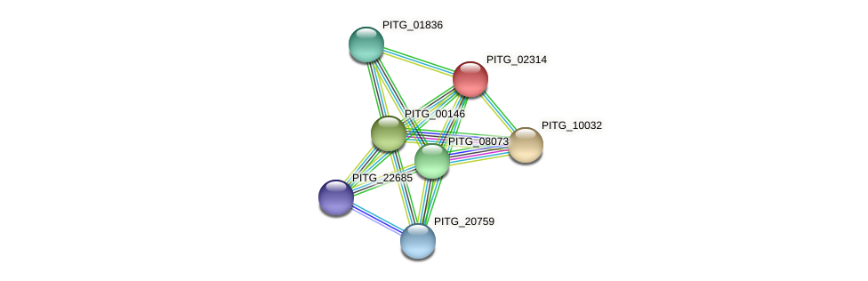 PITG_02314 protein (Phytophthora infestans) - STRING interaction network