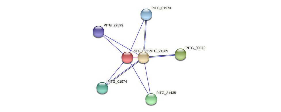 PITG_02331 protein (Phytophthora infestans) - STRING interaction network