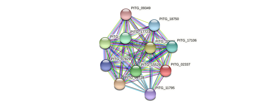 PITG_02337 protein (Phytophthora infestans) - STRING interaction network