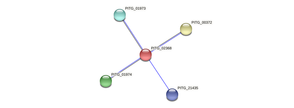 PITG_02368 protein (Phytophthora infestans) - STRING interaction network