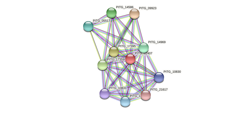 PITG_02407 protein (Phytophthora infestans) - STRING interaction network
