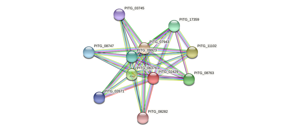 PITG_02429 protein (Phytophthora infestans) - STRING interaction network