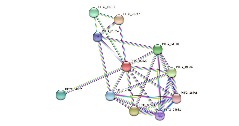 PITG_02522 protein (Phytophthora infestans) - STRING interaction network