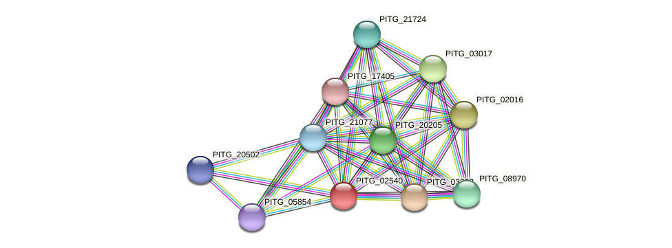 PITG_02540 protein (Phytophthora infestans) - STRING interaction network