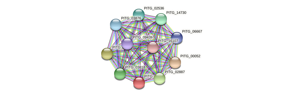 PITG_02593 protein (Phytophthora infestans) - STRING interaction network