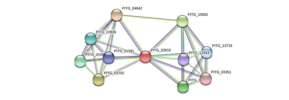 PITG_02616 protein (Phytophthora infestans) - STRING interaction network