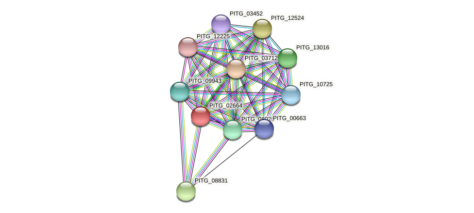 PITG_02664 protein (Phytophthora infestans) - STRING interaction network