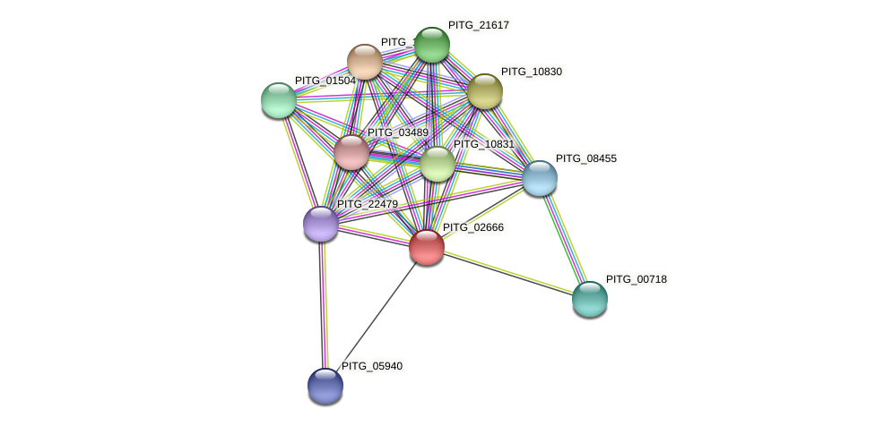 PITG_02666 protein (Phytophthora infestans) - STRING interaction network