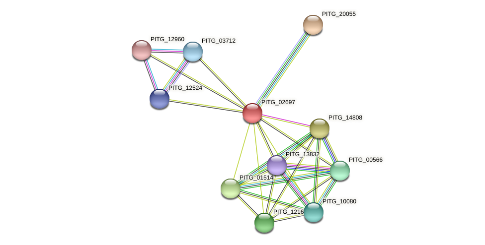 PITG_02697 protein (Phytophthora infestans) - STRING interaction network