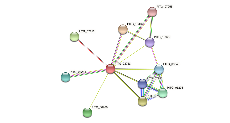 PITG_02711 protein (Phytophthora infestans) - STRING interaction network