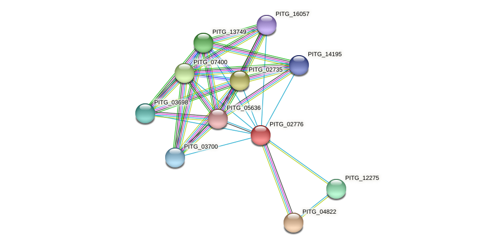 PITG_02776 protein (Phytophthora infestans) - STRING interaction network