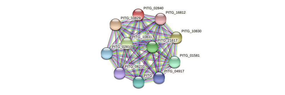 PITG_02840 protein (Phytophthora infestans) - STRING interaction network