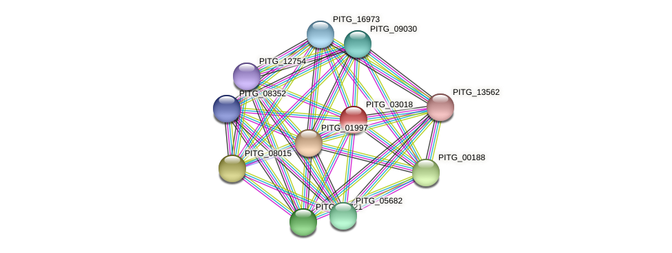 PITG_03018 protein (Phytophthora infestans) - STRING interaction network