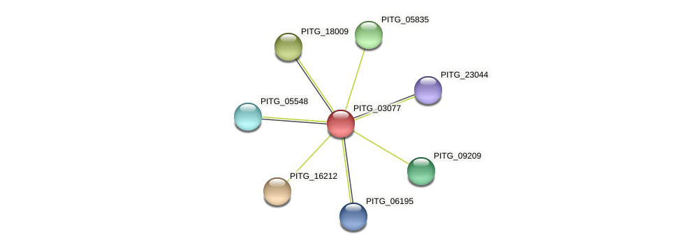PITG_03077 protein (Phytophthora infestans) - STRING interaction network