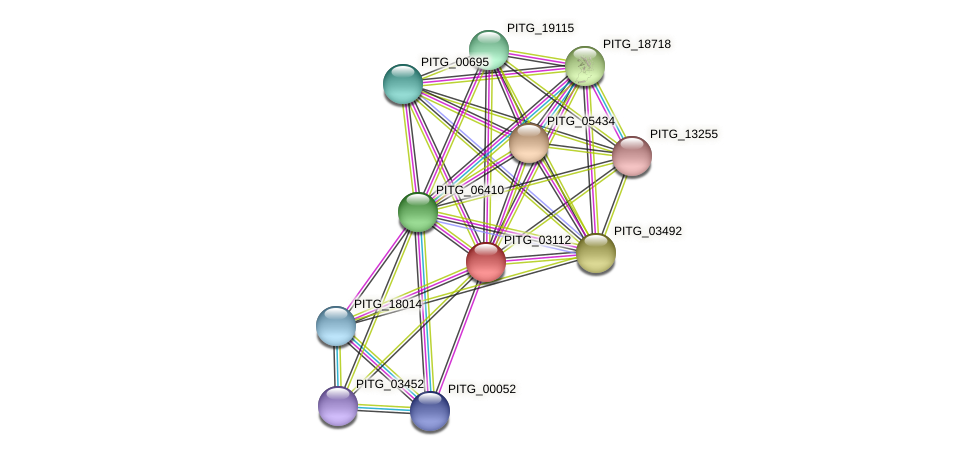 PITG_03112 protein (Phytophthora infestans) - STRING interaction network