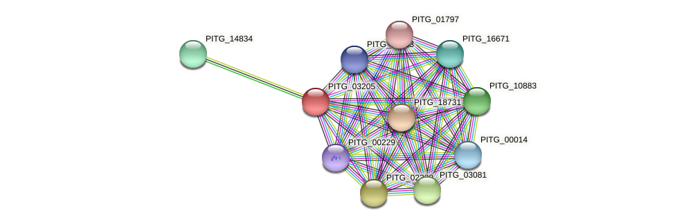 PITG_03205 protein (Phytophthora infestans) - STRING interaction network