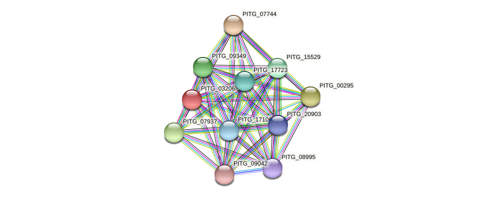 PITG_03206 protein (Phytophthora infestans) - STRING interaction network